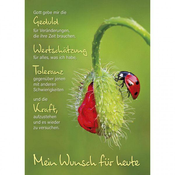 Postkarten: Mein Wunsch für heute, 4 Stück
